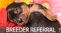 Breeder Referrals, The Yorkshire Terrier Club Of America