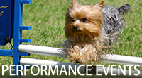 Performance Events, The Yorkshire Terrier Club of America